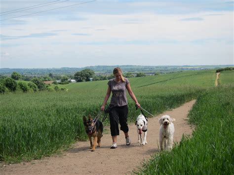 puppy adventure adventure nottingham s and puppy walking feeding and sitting service