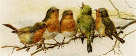 vintage bird clipart john winsch postcard antique new