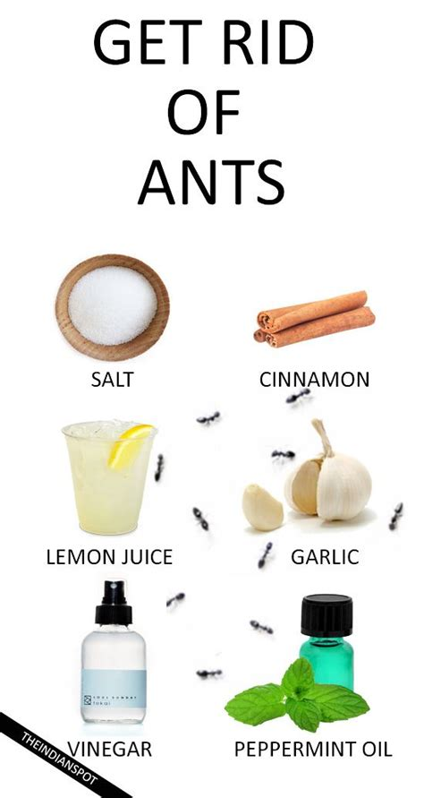 the 25 best get rid of ants ideas on killing