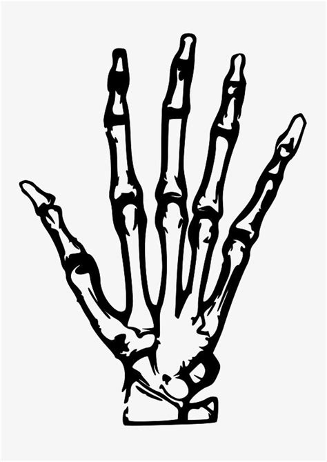 Simple Hand Painted Skeleton Hand | Hand clipart, Skull