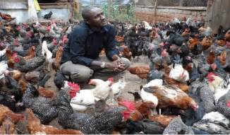 backyard poultry rearing mashariaz former journalist s sh 800 000 kienyenji
