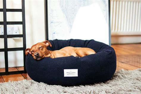 donut dog bed how to choose the right dog bed