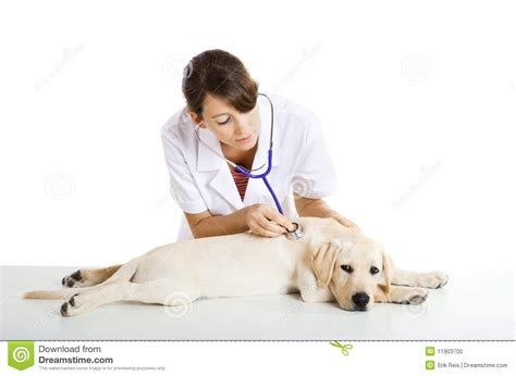 taking care of puppies veterinay taking care of a stock photo image 11903700