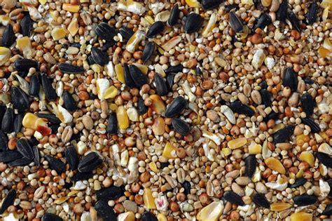 economy mixed seeds for birds kennedy wild bird food ltd