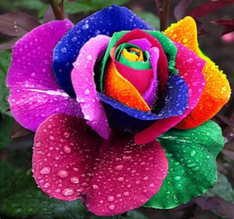 espectaculares imagenes de las flores mas lindas del mundo nombre de flores exoticas del mundo imagui