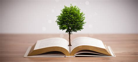 What Of Trees Are Used To Make Paper - scientists genetically modified trees so they can make