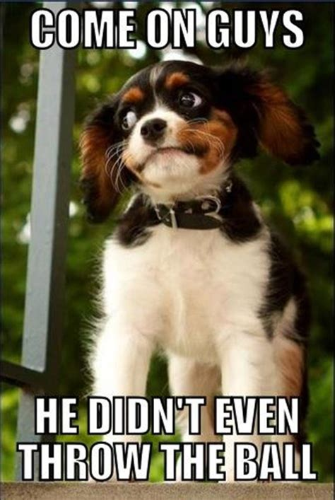Funny Cute Animal Memes - 30 funny animal captions part 4 30 pics amazing