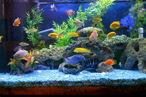 Types Of Aquariums | various types of aquarium accessories and devices