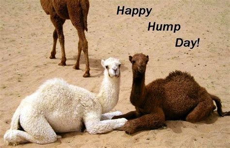 Happy Hump Day by Hump Day Quotes For Quotesgram