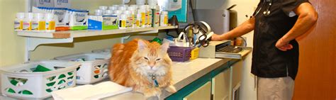 animal house veterinary clinic veterinarian fairbanks alaska animal house veterinary hospital