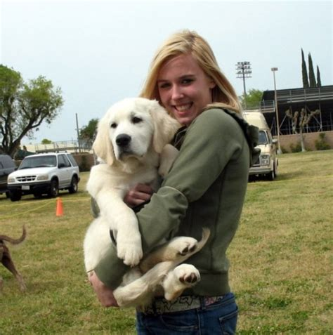 tucson golden retriever home talinigoldens