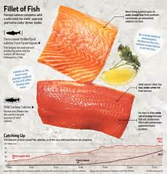 farm raised salmon color top chefs grocers choose farmed salmon wsj