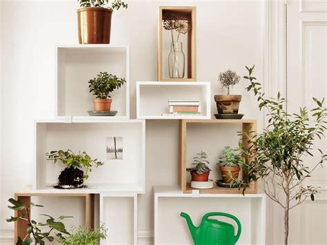 plante appartement liste ooreka