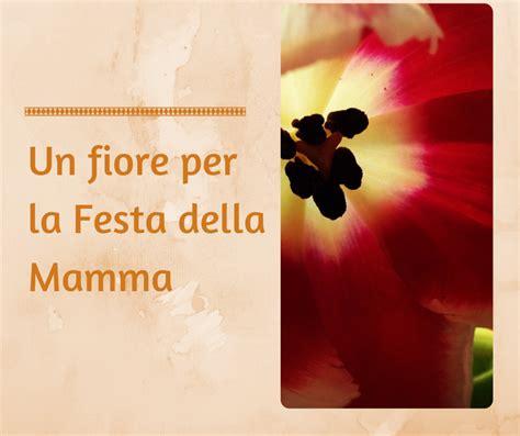 fiori per mamma un fiore per la mamma