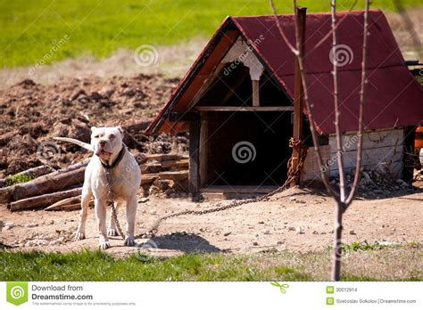 dog houses for pitbulls door from wood pitbull dog house plans