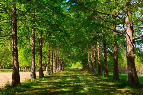 camino verde fotos gratis paisaje 225 rbol naturaleza camino rama