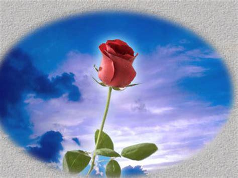 imagenes de flores para un amigo ma 241 anitas para mi amiga youtube