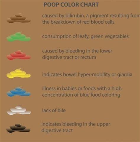 bowel movement color chart human stool color chart