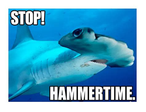 Shark Meme - best shark memes popsugar tech