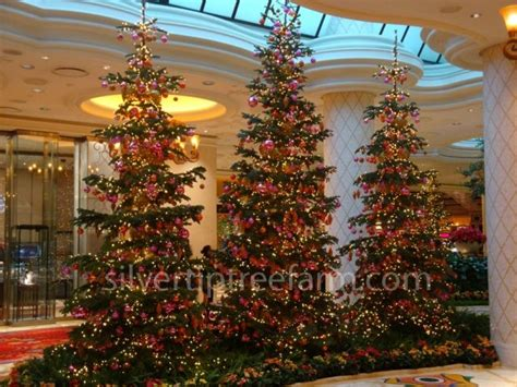 wynn las vegas display of silvertip fir christmas trees