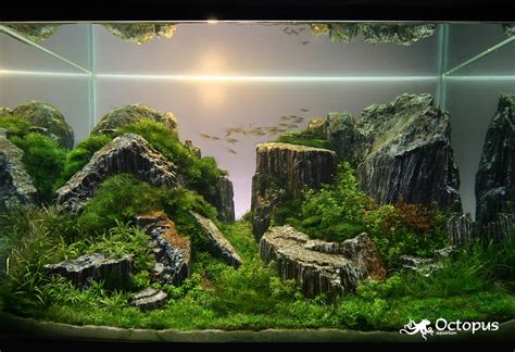Tank Aquascape by Aquatic Aquascaping Aquarium