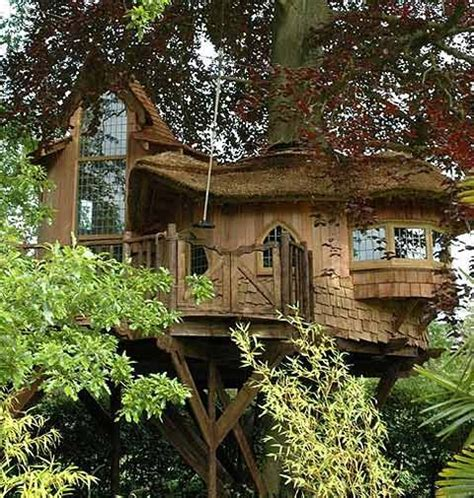 tree house living tree houses