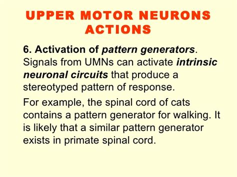 pattern generator spinal cord 8 motor control 08 09