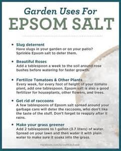epsom salt for garden pests 25 best ideas about epsom salt for tomatoes on