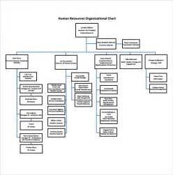 employee organizational chart template sle human resources organizational chart 9 documents