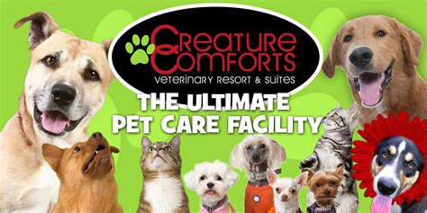 creature comforts inman creature comforts veterinary resort suites spartanburg sc