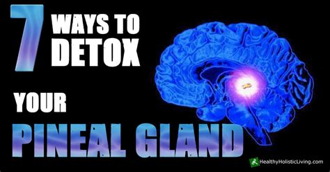 Top Ten Ways To Detox Your by 7 Ways To Detox Your Pineal Gland Healthy Holistic Living