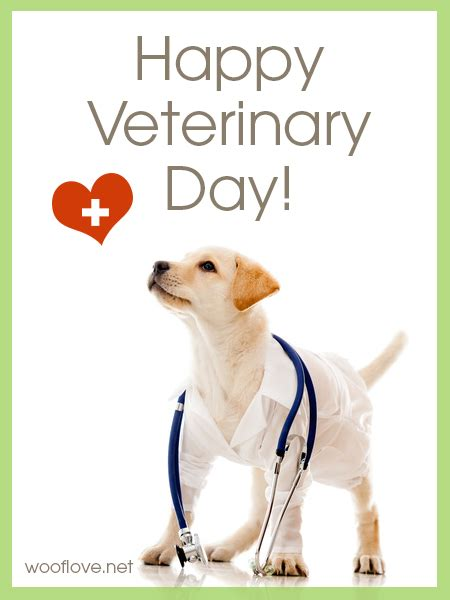 the happy veterinarian a guide for finding happiness in veterinary medicine in challenging times books world veterinary day dogs design