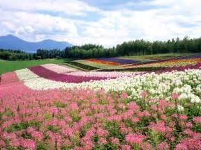 Flower Garden In Japan Hokkaido Japan Travel Info And Travel Guide Travel Destination