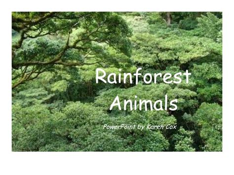 Rainforest Animals Rainforest Powerpoint