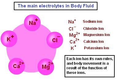 The Role Of Ions In Body Chemistry Bob Mccauleys Blog | electrolytes what they are and why they are important