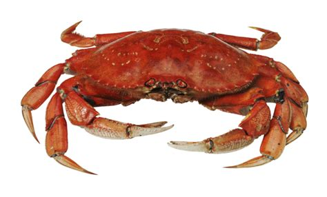 big boat dream interpretation the meaning and symbolism of the word 171 crabs 187