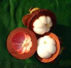 Kulit Tebal Coklat Terang informasiherbal informasi obat alami dan thibbun nabawi