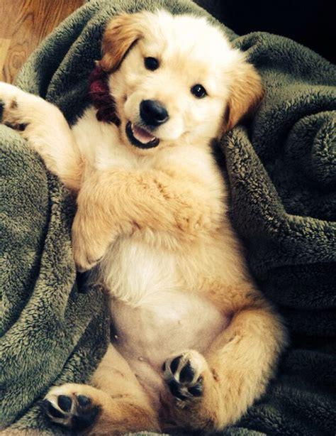 6 tumblr image 993833 by korshun on favim com animal cute dog tumblr image 2703266 by lady d on