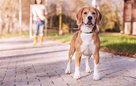 types of leashes 8 types of leashes and how to choose the right one for your pet