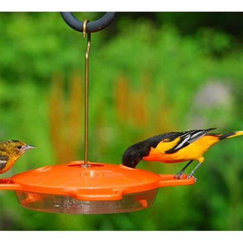 aspects 174 oriole feeder