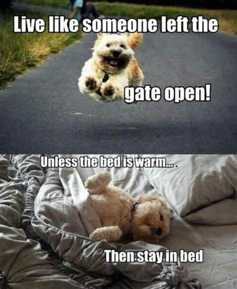Stay in bed   Funny Pictures, Quotes, Memes, Jokes