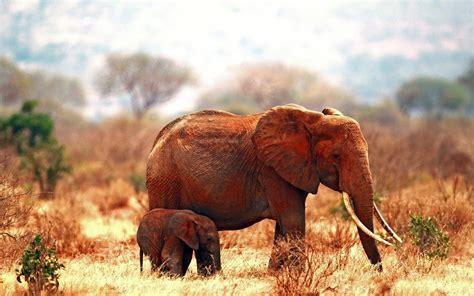 syari eleghant selebrity elephant photos hd hd desktop wallpapers 4k hd