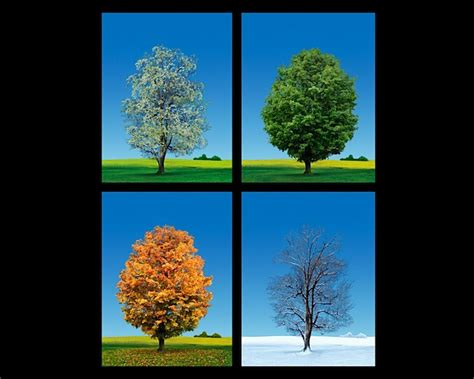 tree seasons come seasons 4 seasons trees studio macbeth living beauty trees