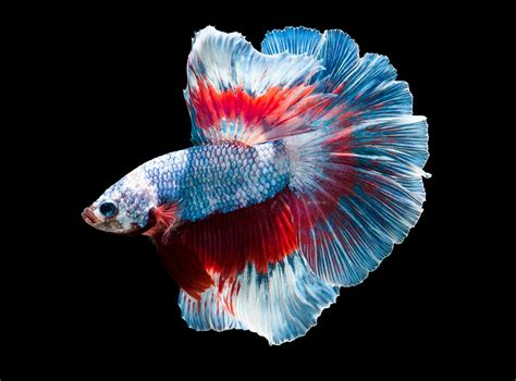 colorful animals fish colorful animals wallpapers hd desktop and mobile