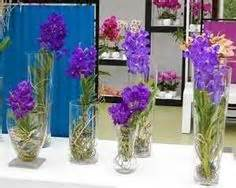 How To Keep Orchids Alive In A Vase 1000 Images About Water Culture Orchids On Pinterest