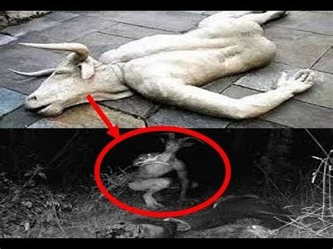 mysterious creatures caught on tape 2016 | mysterious