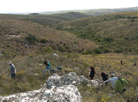 Write An Essay On Floristic Regions Of The World by What Is Renosterveld Notes From A Cape Town Botanist