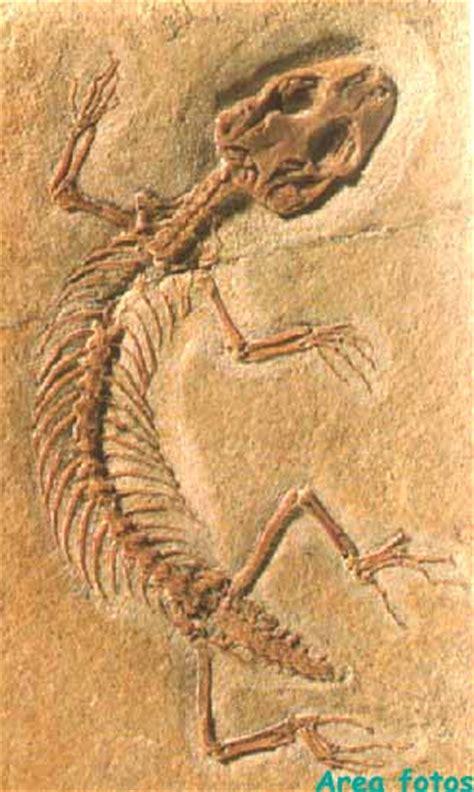 imagenes de fosiles biologia secundaria 12 fosiles