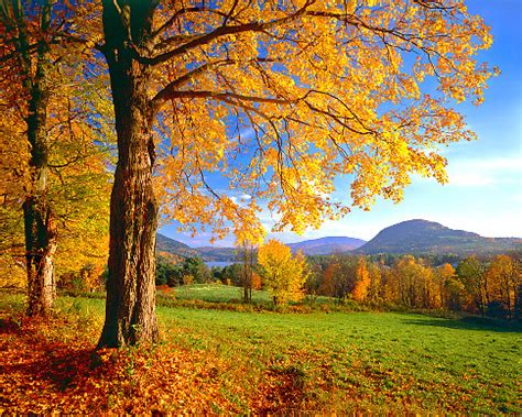 active travels: favorite vermont fall drive – everett
