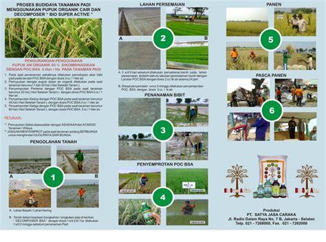 Bio Di Malaysia proses budidaya tanaman padi menggunakan pupuk organik